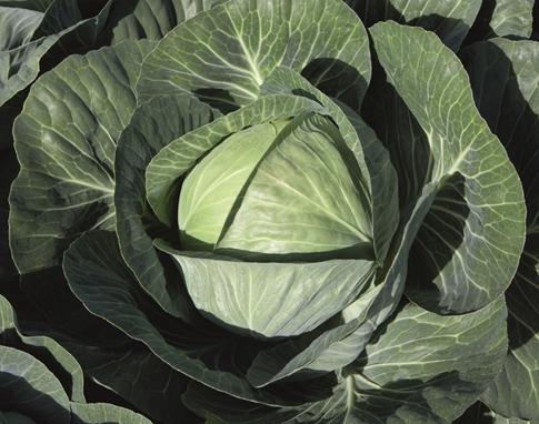 Средства для капусты